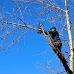 5 Reasons Why You Should Hire a Tree Arborist in Sydney